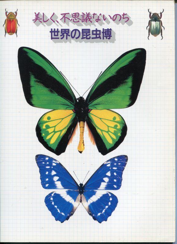 画像1: 美しく、不思議ないのち 世界の昆虫博